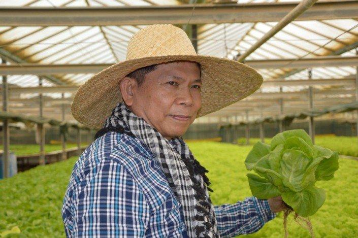 Managing greenhouse hydroponics in Al Kharj, Saudi Arabia